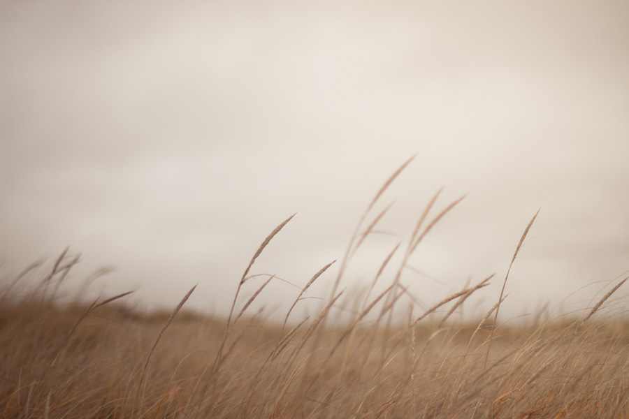 tall grass, grass, brown, nature
