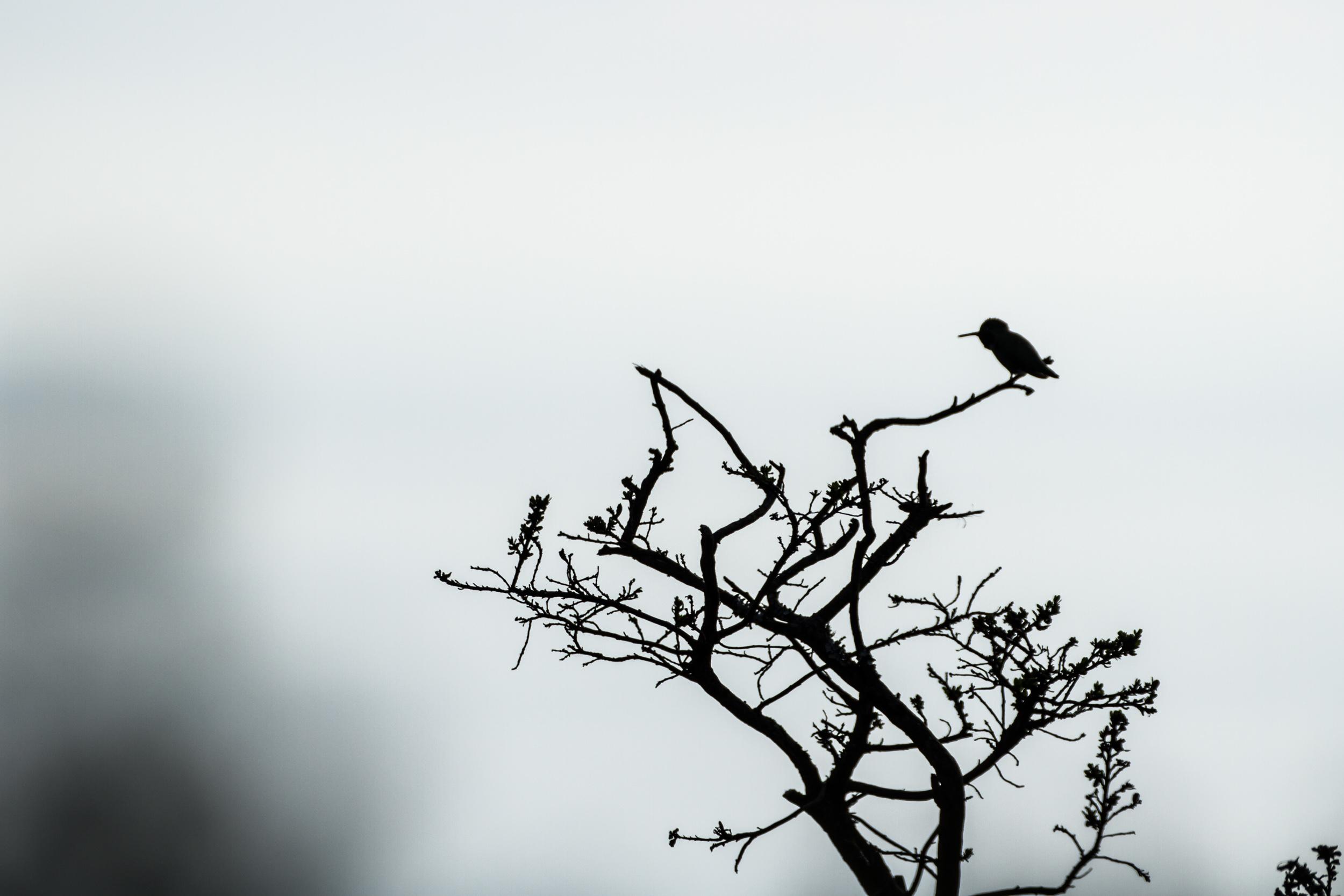 Wallpaper Wednesday – Hummingbird Silhouette