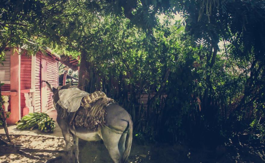 Dominican Republic, donkey, pink house, hidden, mystery, exotic, el campo, http://wetravelandblog.com