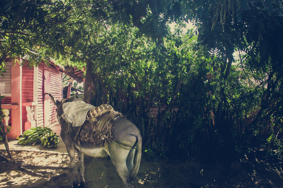 Dominican Republic, donkey, pink house, hidden, mystery, exotic, el campo, http://wetravelandblog.com
