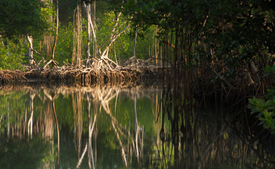 Into the Mangrove Mystery