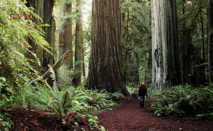 Redwoods, sequoia, giant trees, get lost, forest, girl, traveler, alone, nature, landscape, http://wetravelandblog.com