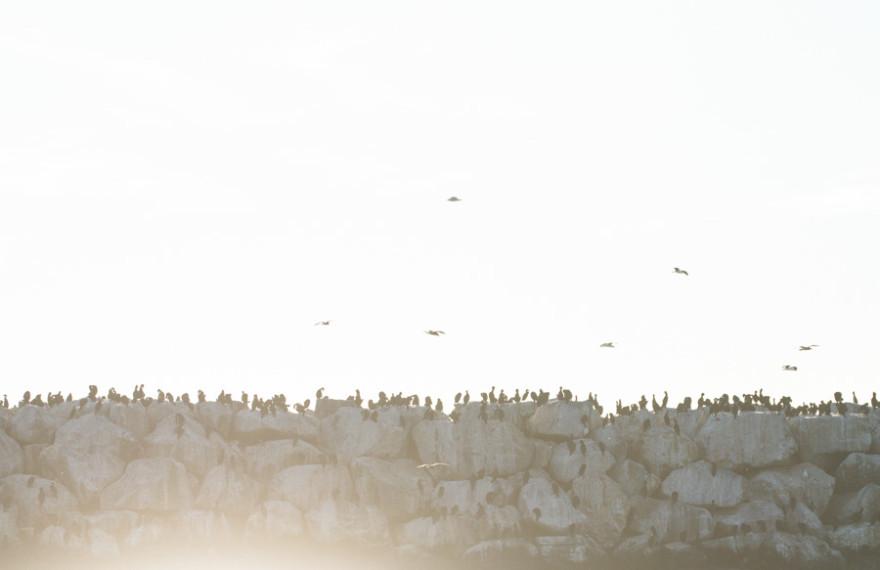 Birds of the World-1-6