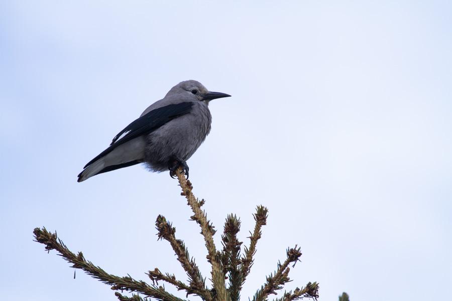 Birds of the World-14