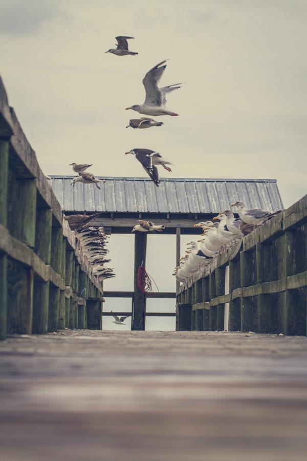 Birds of the World-2-2