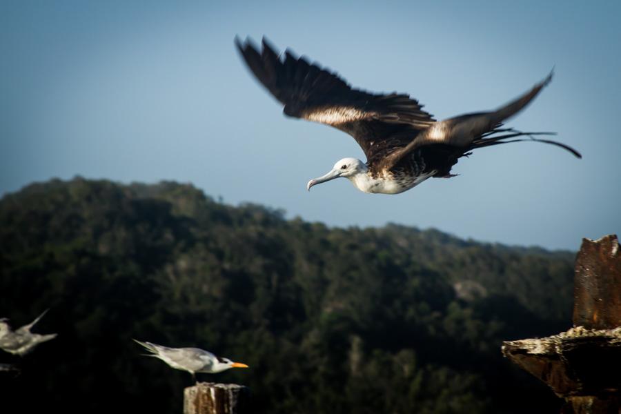 Birds of the World-2