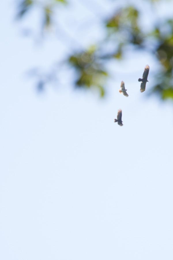 Birds of the World-6