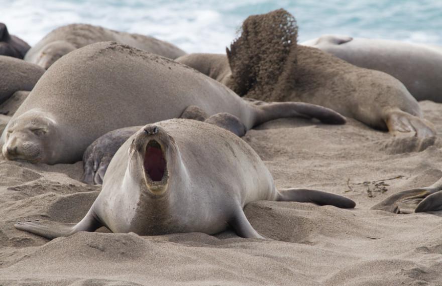 Elephant Seals Post-10