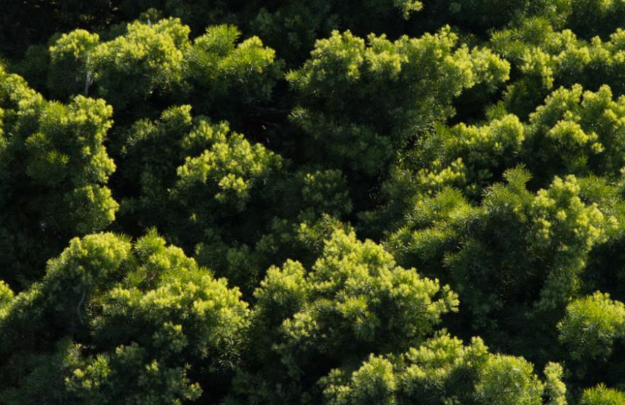 green, bush, nature