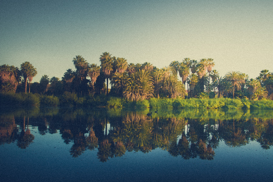 Oasis, Mirage, water, baja, desert, sound, soundscape, escape, travel, podcast, sunrise, birds, http://wetravelandblog.com