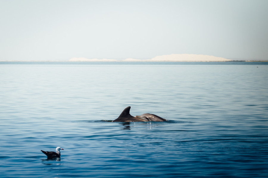 Laguna San Ignacio Whale Watching-3
