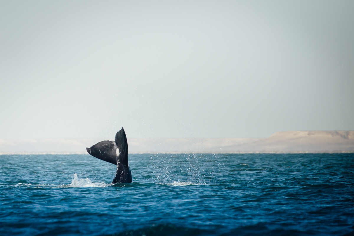 whale tail small-1