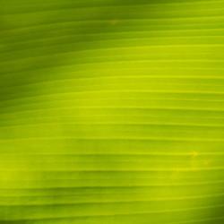 Jungle Pace Small-1