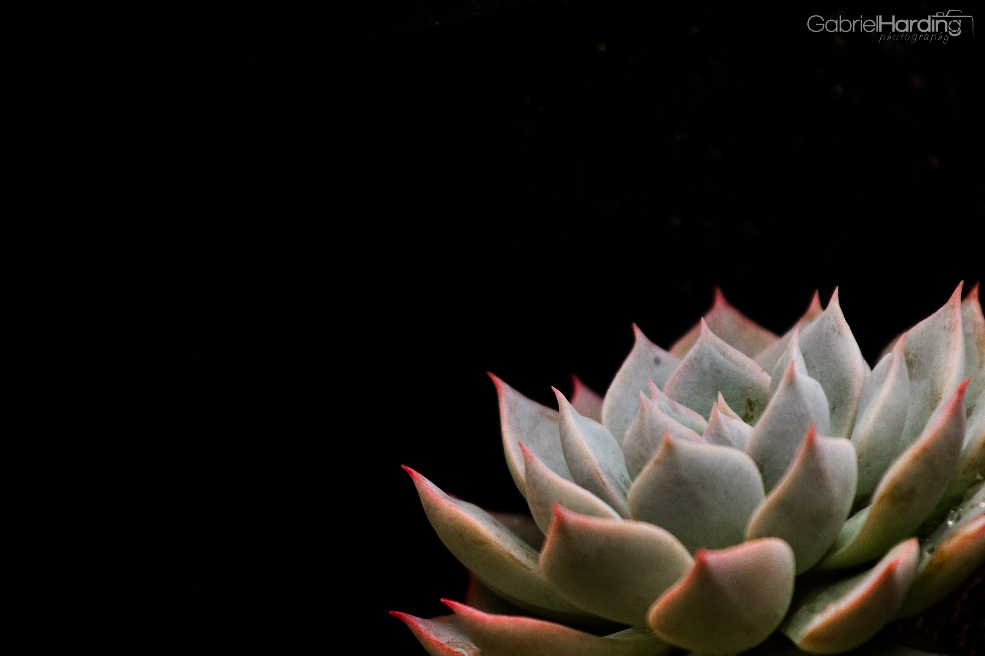 Wallpaper Wednesday July 17th Pink Tipped Succulent We Travel